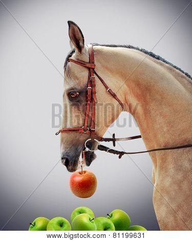 Akhal-Teke horse. Choice.