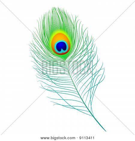Pluma de pavo real. Representación detallada.