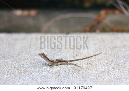 The Newt by The Drain
