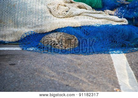 Funny Cat Resting On  Fishing Nets In A Harbor