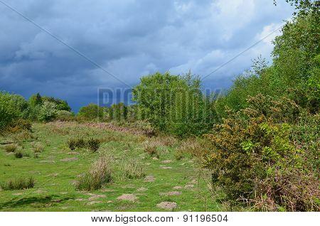 Open heathland in rural England.