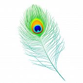 Vector illustration of a peacock feather. Detailed portrayal. poster