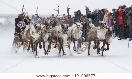 Racing On Reindeer