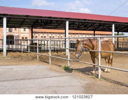 Chernyakhovsk, Russia: Stud Farm Georgenburg