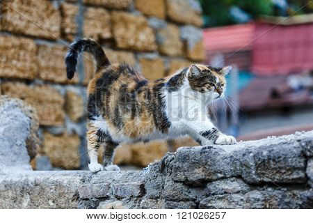 Patchy Cat Stretches Himself On The Stone Wall