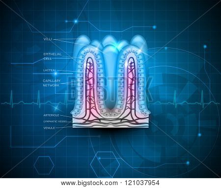 Intestinal Villi Blue Technology Background