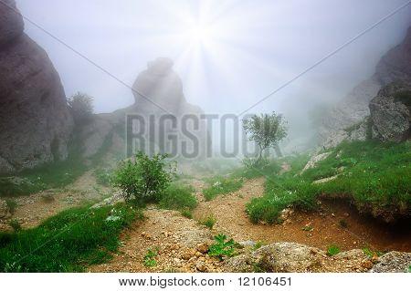 Wood with a fog