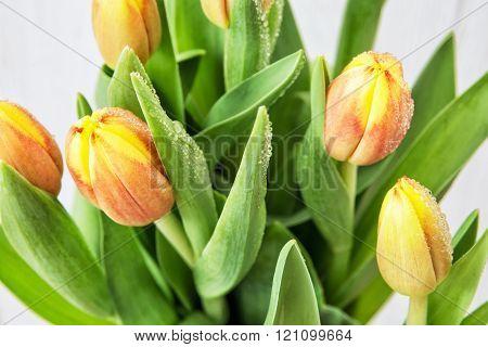 Beautiful Orange Tulips With Dew, Bouquet Of Cut Flowers