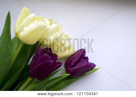 Photo Of Violet And Yellow Tulips In Spring