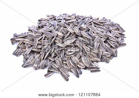 Sun Flower Seed On White Background