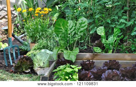 Greenery Vegetable Garden