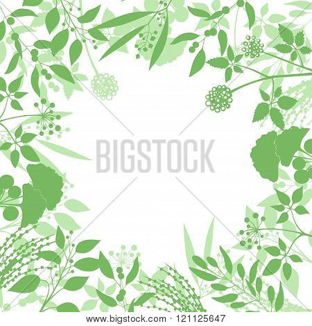 Green square background with collection of plants. Silhouette of herbs branches isolated on white ba