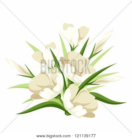 Bouquet of white flowers. Vector illustration.