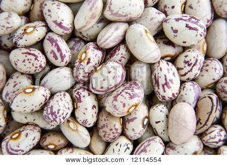 Haricot beans