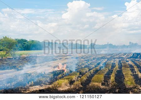 Burning In Rice To Start A New Planting Season