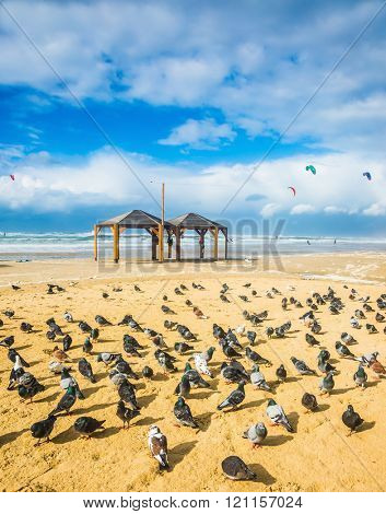 Windy winter day in the Mediterranean Sea. Large flock of pigeons resting on a sandy beach