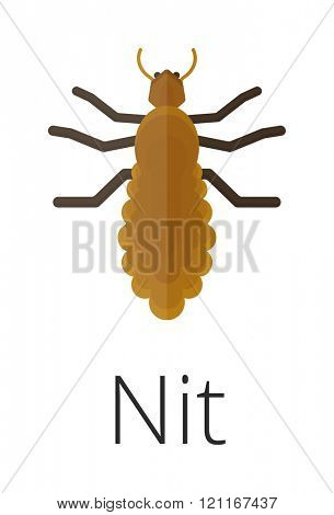 Nit  skin parasite insect bug vector. Bug insect Nit isolated on white background. Insect skin parasite biology vector bugs. Skin parasite Nit  flying bugs. Nit bugs.