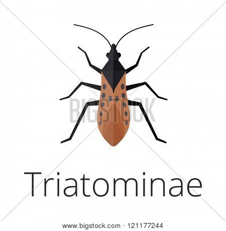 Triatominae skin parasite insect vector bug. Bug insect triatomine isolated on white background. Insect skin parasite biology bugs. Skin parasite vector triatomine flying bugs. Triatomine bugs.