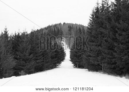 black and white photo of a path leading on the Kykulka mountain in Beskydy mountains in winter