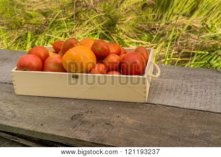 Fresh eco tomatoes in wooden box