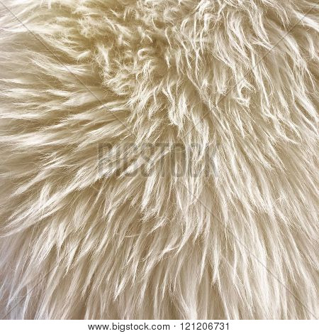 White Fur Background