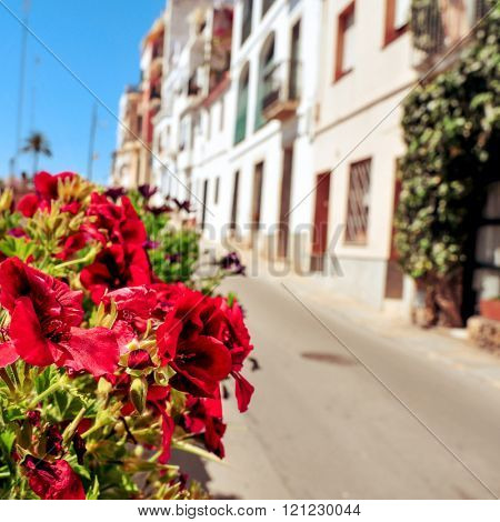 view of a peaceful street in a small mediterranean village, with a plant with colorful red flowers in the foreground