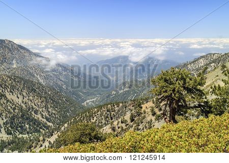 Hiking in the Mt. Baldy Trail