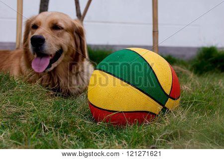 Ball With Dog