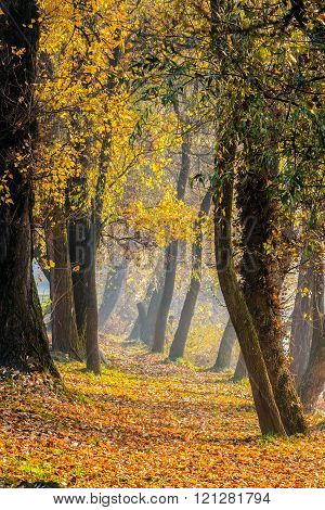 Footpath In Autumn Forest In Fog