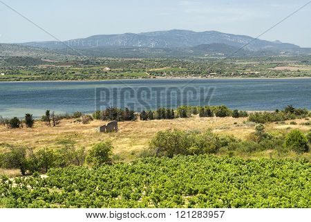 Summer Landscape In Languedoc-roussillon (france)