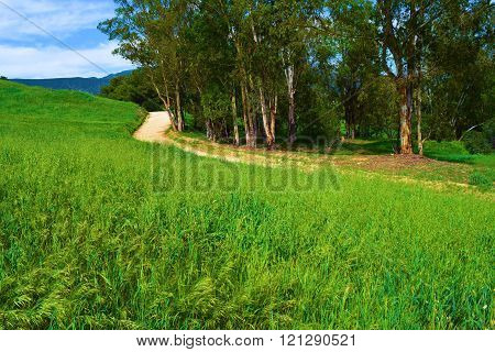 Hiking trail through a lush green meadow with Eucalyptus Trees taken at Johnsons Pasture in Claremont, CA