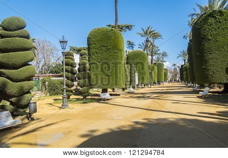 Genoves Park in Cadiz Andalusia Spain Europe