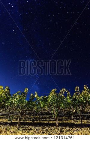 Milky Way Over Vineyards In California's Wine Country