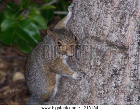 A Squirrel Stops To Say Hello