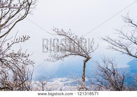 Dried Tree With Snow