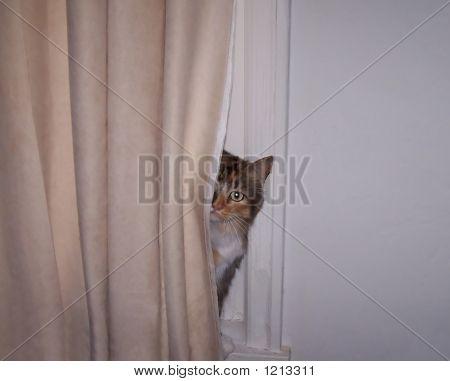 A Kitty Peeks