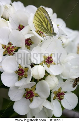 Butterfly On The White Flower