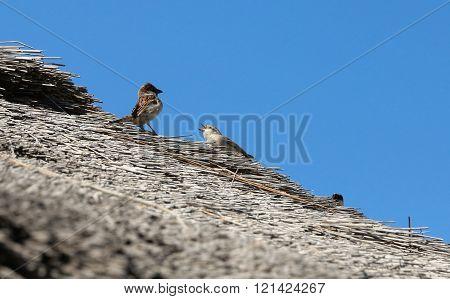 birds quarrelling