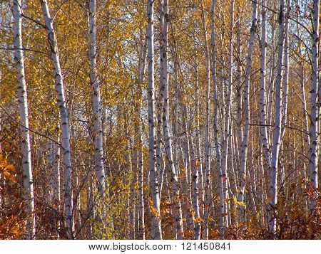 Autumn Etude