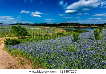 An Old Texas Country Dirt Road in a Field Full of the Famous Texas Bluebonnet (Lupinus texensis) Wildflowers. An Amazing Display at Muleshoe Bend on the Colorado River in Texas.