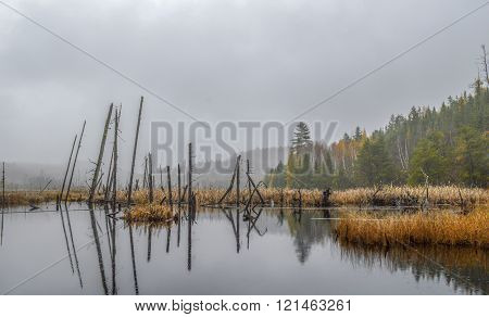 Secluded beaver pond in the middle of the wood on a rainy and foggy fall day golden straw surrounding the pond at the foot of the mountain.