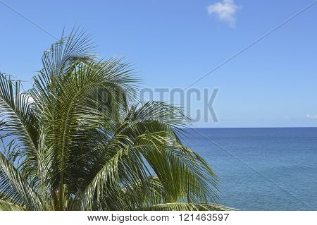 Healthy Palm Tree And Calm Waters