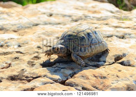earthen turtle crawling on a stone surface