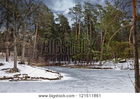 winter forest lake