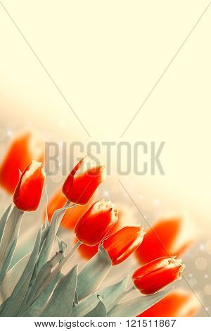 Spring Flowers Bunch. Beautiful Red Tulips Gift Over Blurred Green Nature Background. Springtime Car