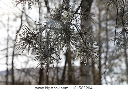 Trees and branches in a hoarfrost