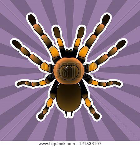 Insect anatomy. Tarantula spider. Brachypelma smithi, spider female. Sketch of spider. Tarantula . V