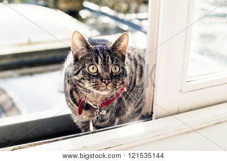 Young Cat Looking Through Open Sliding Door.