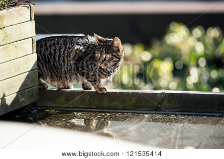 Alert Tabby Walking On Edge Of Roof.