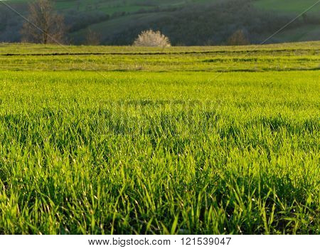field and green grass
